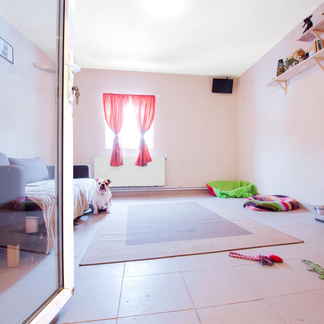 pet hotel in Bucuresti